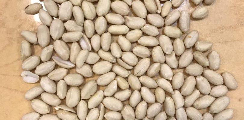 فروش بادام زمینی چینی تکمال tekmal